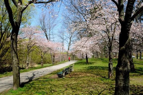 Springtime_in_Toronto_jpg_600x900_autocrop_q85