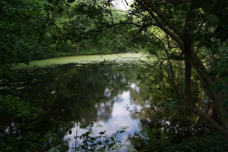 Taddle_Creek_pond_in_Wychwood_Park-Need Wiki credi