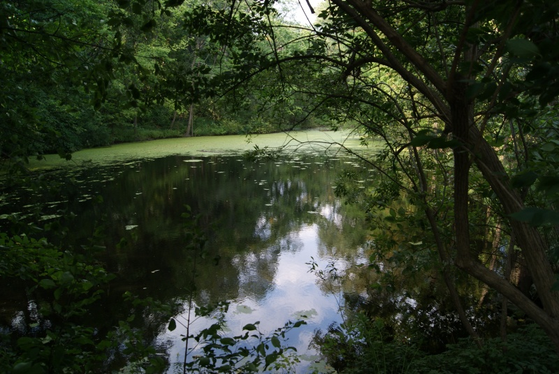 Taddle_Creek_pond_in_Wychwood_Park